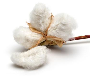 cottonseedoil